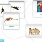 imágenes de animales de la plataforma de rehabilitación NeuronUP