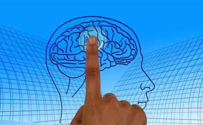 El Cerebro Sexual: Neurociencia y diferencias ligadas al sexo