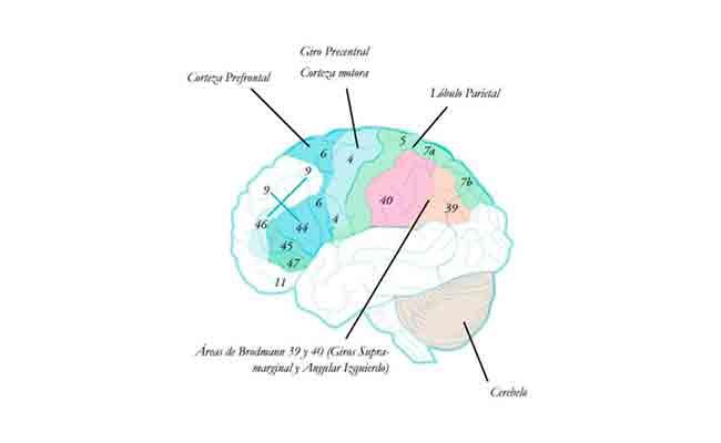 Guía breve para la revisión de literatura sobre apraxias Vol. 1