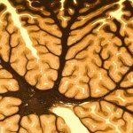 El aprendizaje motor: qué es, factores, metodología y objetivo