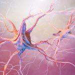 epilepsia, sistema nervioso